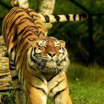 #1. programötlet – Fogadjatok örökbe egy állatot – Nyugi! Csak képletesen
